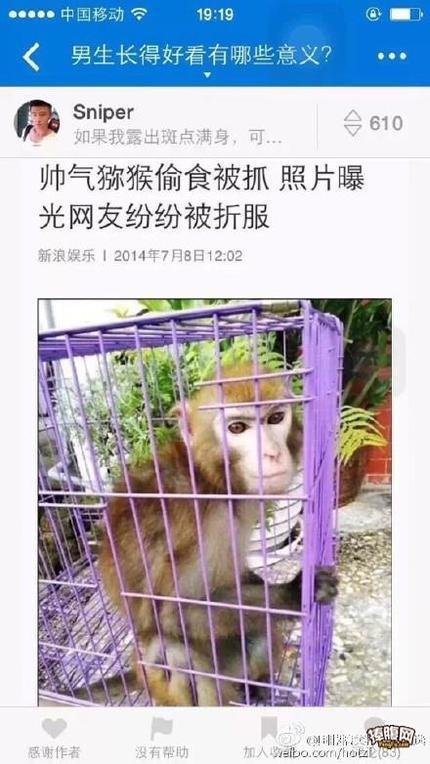 连猴子都比不过