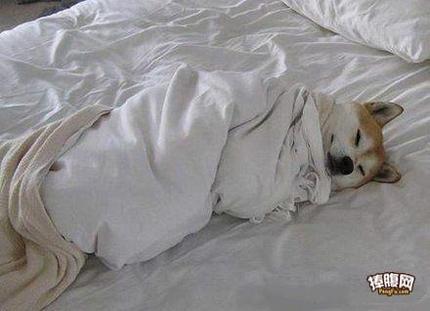 人家感冒了汪,表叫醒我!